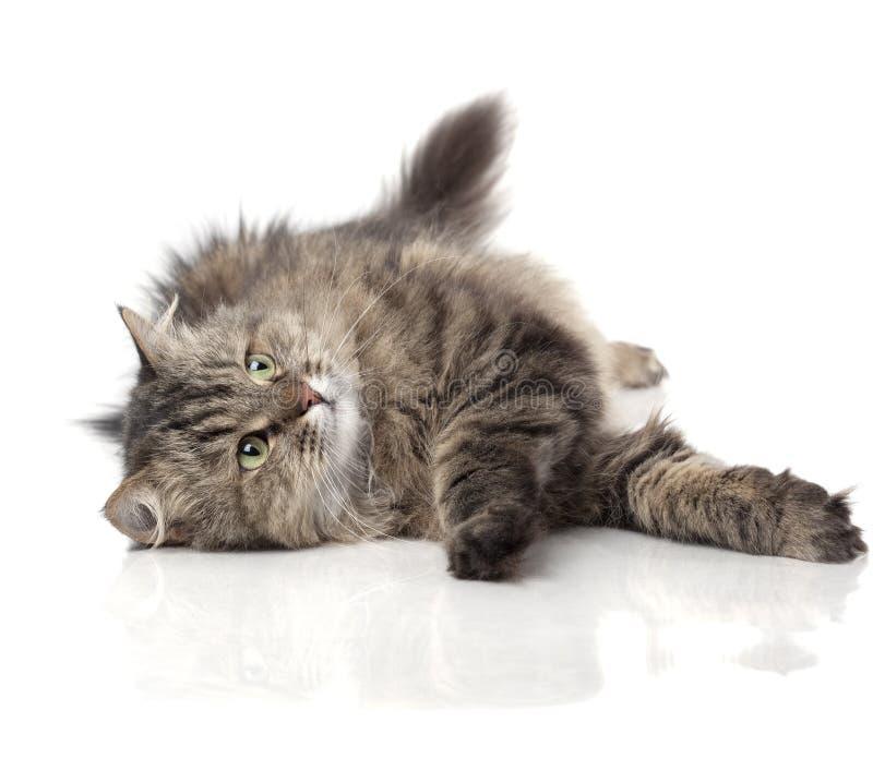 rolig härlig katt royaltyfri bild