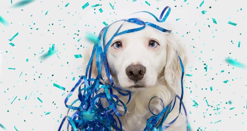 Rolig hund för baner som firar partiet för nytt år, karneval- eller födelsedagmed blåa serpentinesbanderoller bakgrund isolerad w fotografering för bildbyråer