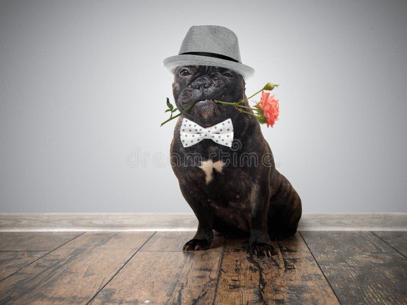 Rolig hund med en blomma i hans mun royaltyfri fotografi
