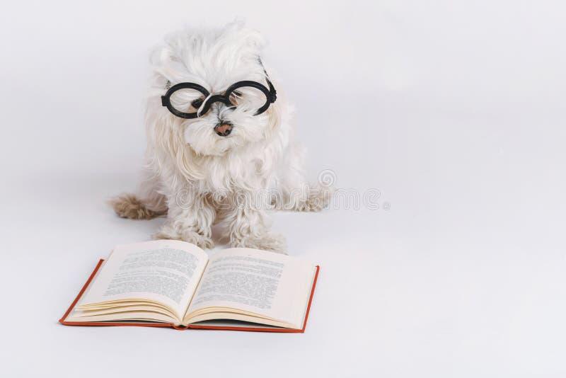 Rolig hund med exponeringsglas och en bok arkivbild