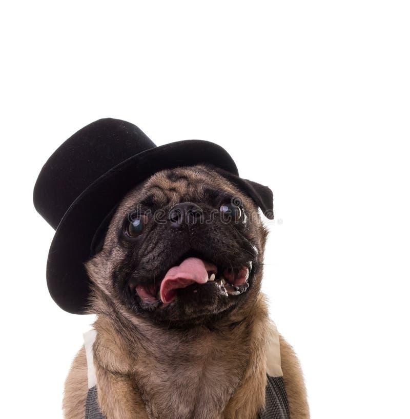 Rolig hund som slitage en övre hatt arkivfoto