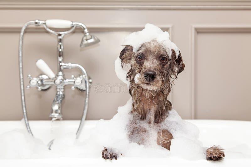 Rolig hund som tar bubbelbadet arkivbild
