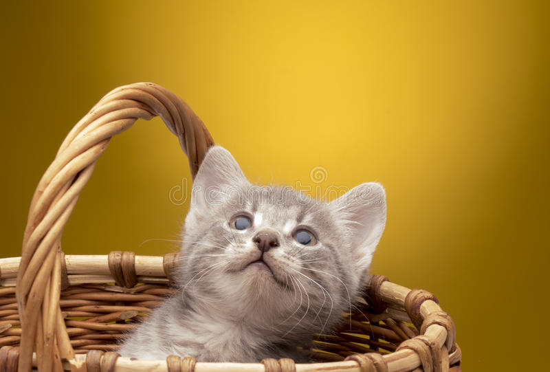 rolig isolerad kattunge little som är vit royaltyfri foto