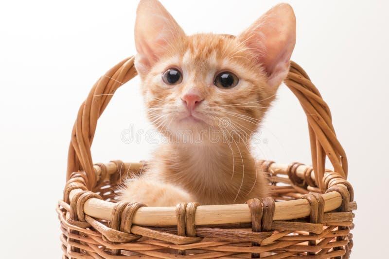 rolig isolerad kattunge little som är vit royaltyfri fotografi