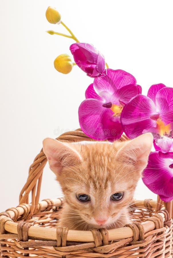 rolig isolerad kattunge little som är vit royaltyfria bilder