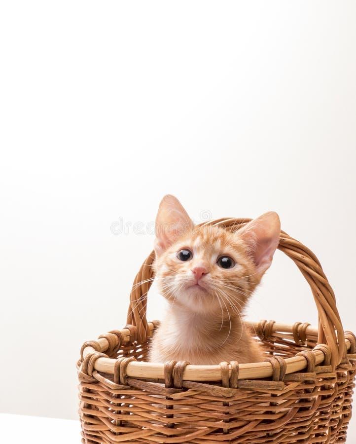 rolig isolerad kattunge little som är vit royaltyfri bild