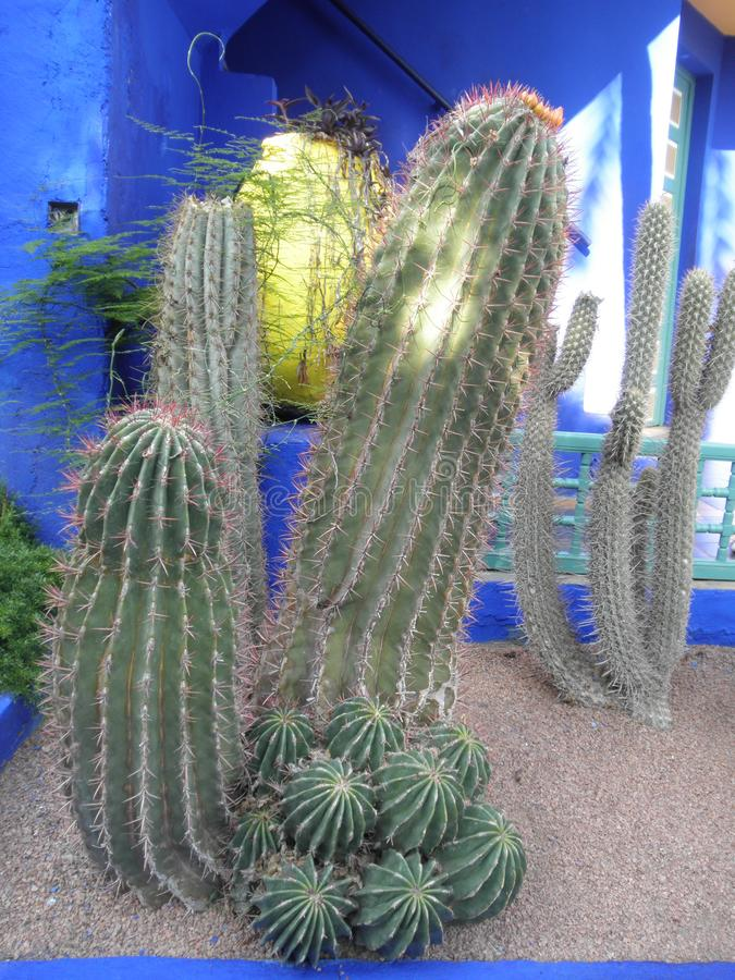 Rolig kaktus royaltyfria foton