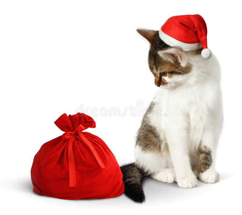 Rolig katt med den santa hatten och säcken på vit arkivfoton