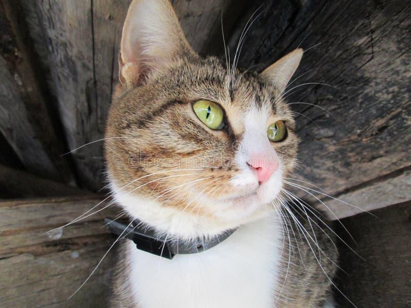 Rolig katt med långa morrhår royaltyfri fotografi