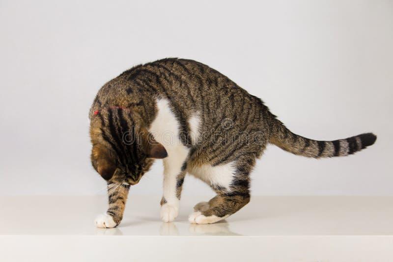 Rolig kattlek med skugga royaltyfri foto
