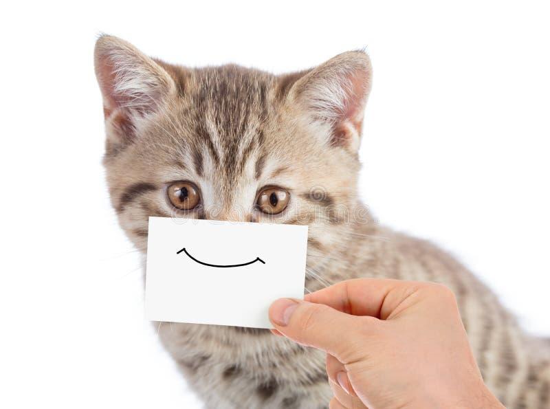 Rolig kattstående med leende på papp royaltyfri bild