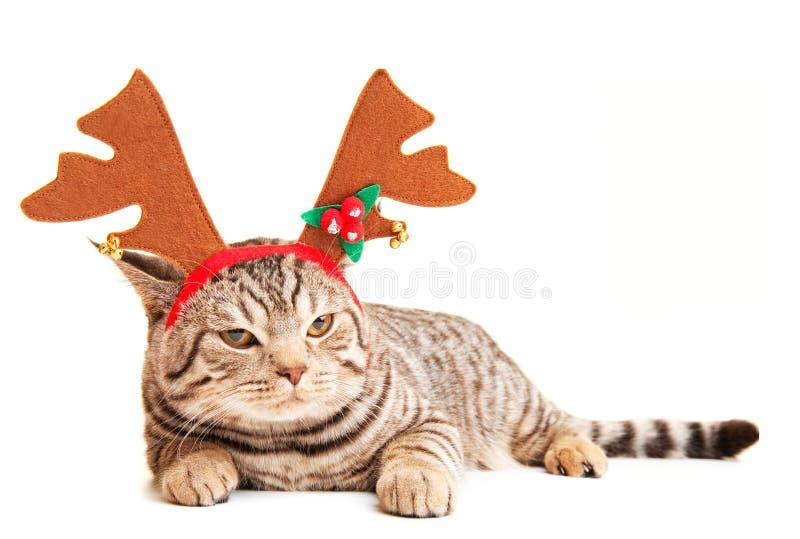 rolig kattunge royaltyfri bild