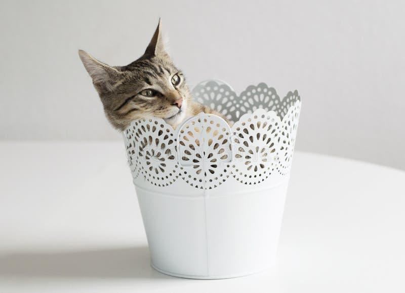 Rolig kattunge inom en växtkruka arkivbilder