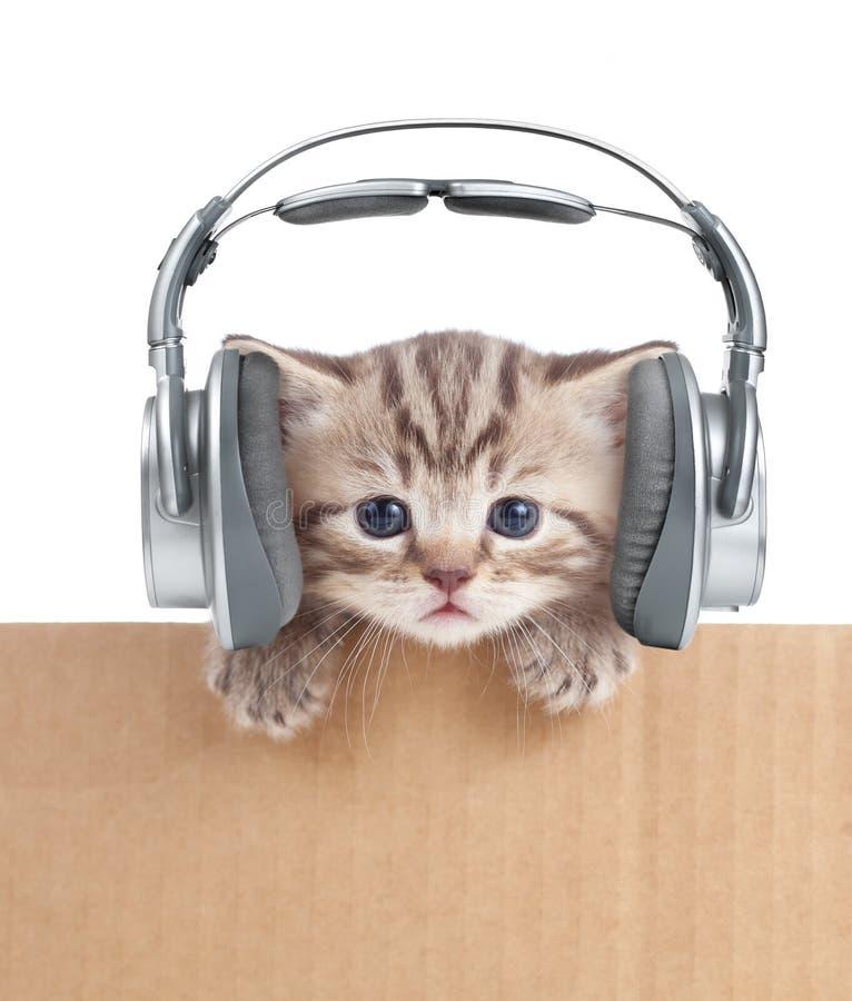 Rolig kattungekatt i hörlurar i kartong royaltyfri bild