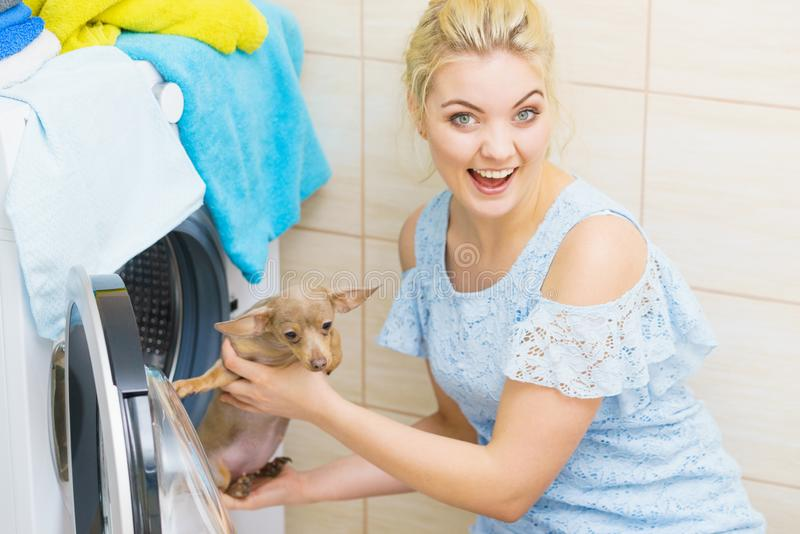 Rolig kvinna som sätter den lilla hunden in i tvagningmaskinen arkivfoto