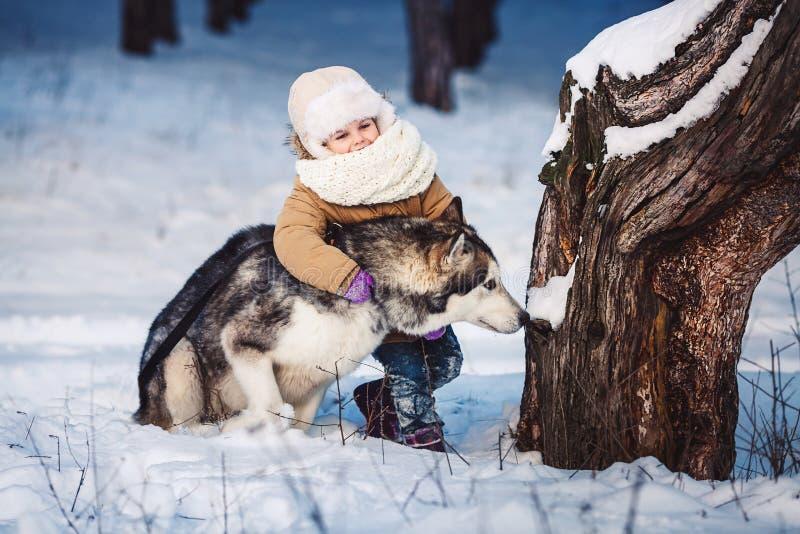 Rolig liten flicka som kramar hennes stora Malamutehund i vinter i skogen royaltyfri foto