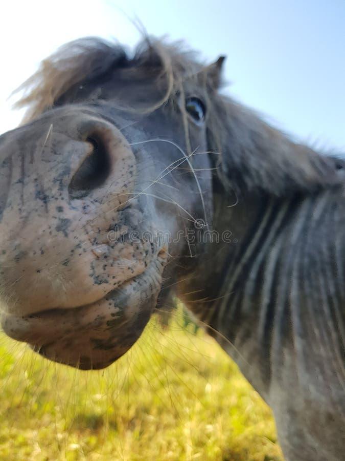 Rolig liten häst royaltyfria bilder