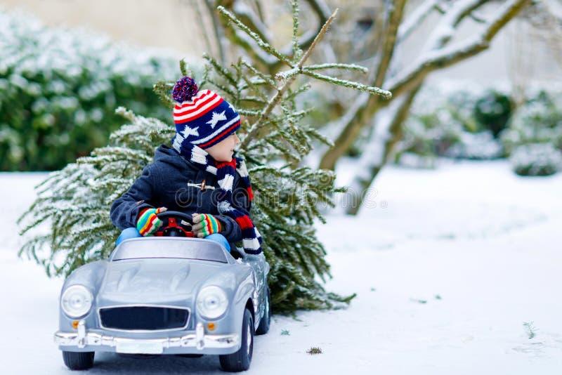 Rolig liten le ungepojke som kör leksakbilen med julgranen Det lyckliga barnet i vintermode beklär huggit ut att komma med arkivbild