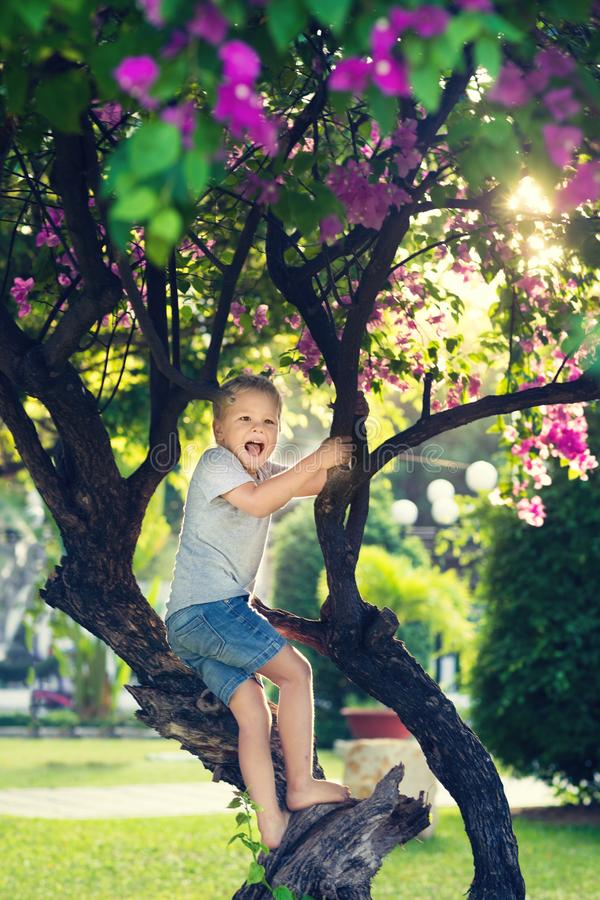 Rolig pojke på trädet royaltyfri fotografi