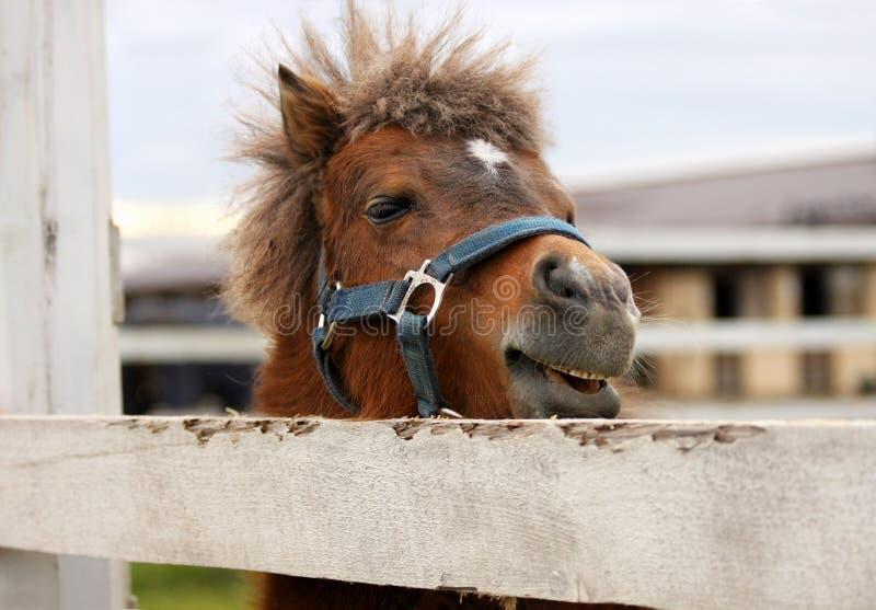 rolig ponny arkivfoto