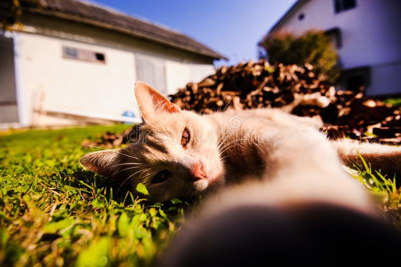 Rolig rödhårig katt som gör selfie field treen Djur planet royaltyfria bilder