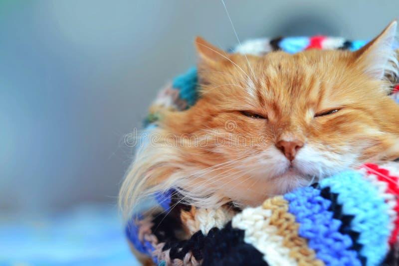 rolig red för katt royaltyfri bild