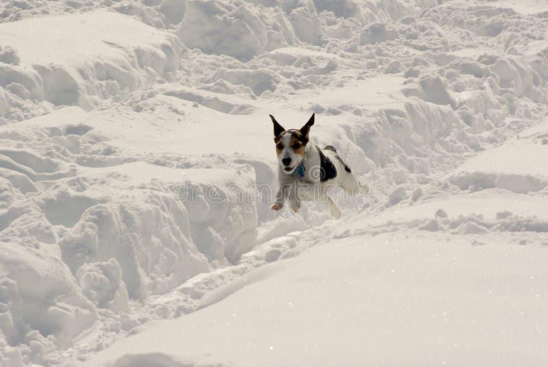 rolig snow fotografering för bildbyråer