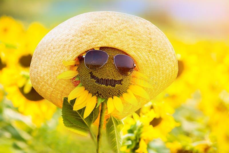 Rolig solros i exponeringsglas och en hatt som ler arkivbild