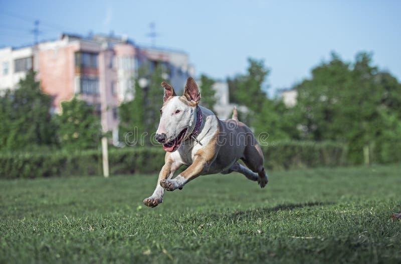 Rolig spring för hund längs gräset fotografering för bildbyråer