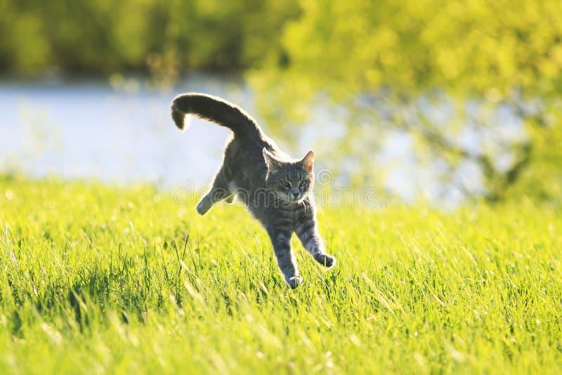 Rolig spring för strimmig kattkatt på grön äng i solig dag arkivbild