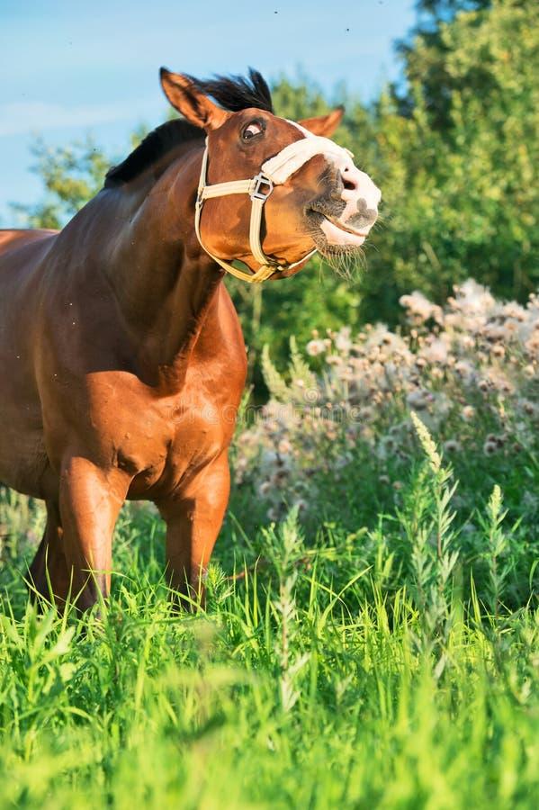 Rolig stående av fjärdhästen i fältet royaltyfri fotografi