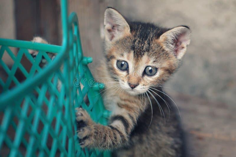 Rolig strimmig kattkattunge som spelar med en korg royaltyfri foto