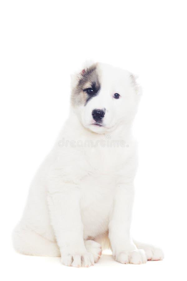 Rolig valpfårhundkapplöpning royaltyfri bild