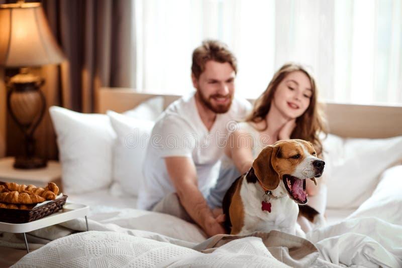 Roliga hundgäspningar, medan sitter i säng nära värdar som tillfredsställs med den lyckliga kvinnlign för den läckra frukosten, o arkivfoton