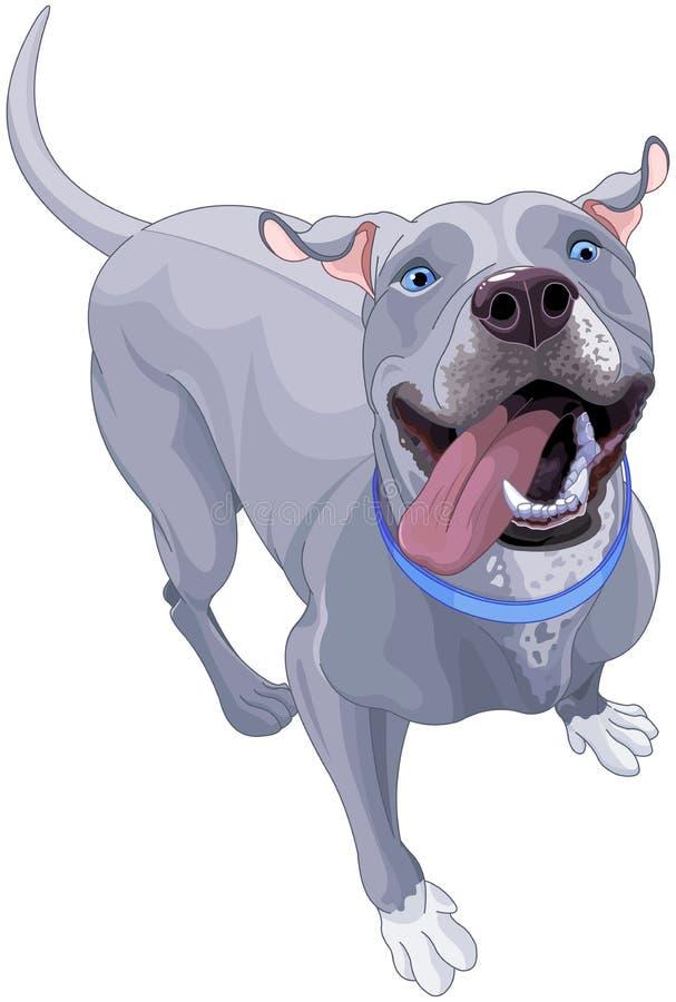 Roliga Pit Bull Dog stock illustrationer