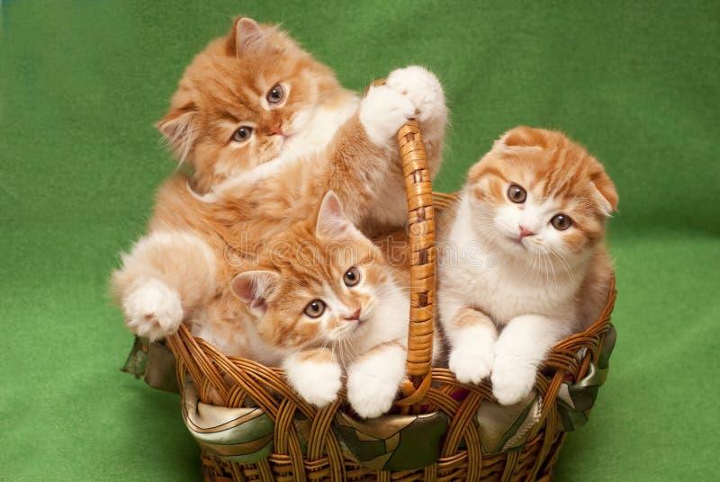 Roliga röda kattungar i en korg royaltyfria bilder