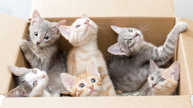 Roliga små kattungar i en ask royaltyfri foto