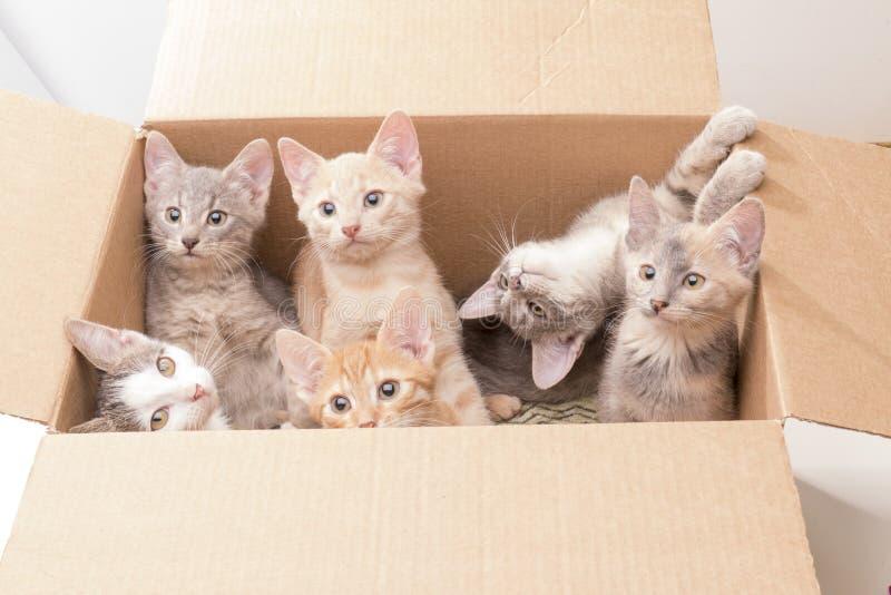 Roliga små kattungar i en ask arkivfoto
