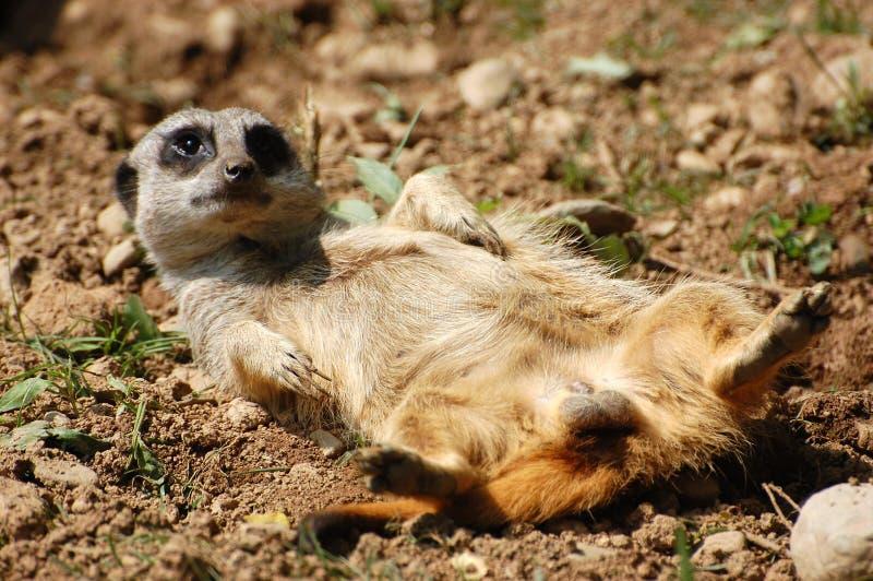roligt djur royaltyfria bilder