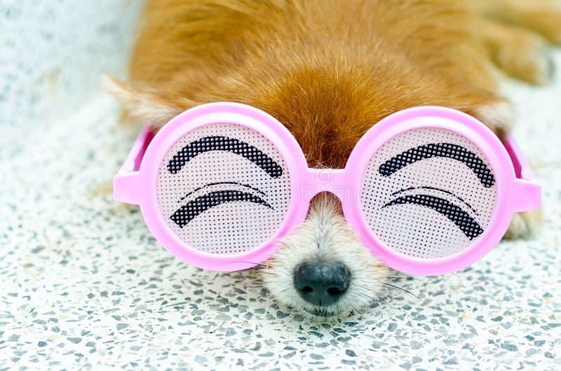 roligt exponeringsglasslitage för hund fotografering för bildbyråer