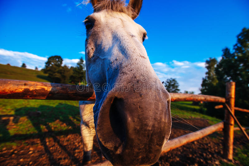 Roligt hästslut upp arkivbilder