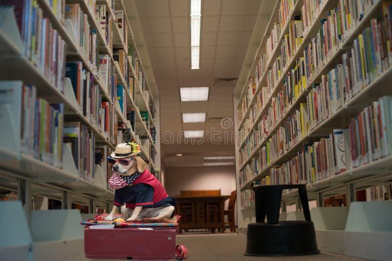 Roligt hundhusdjur i dräkt royaltyfri fotografi