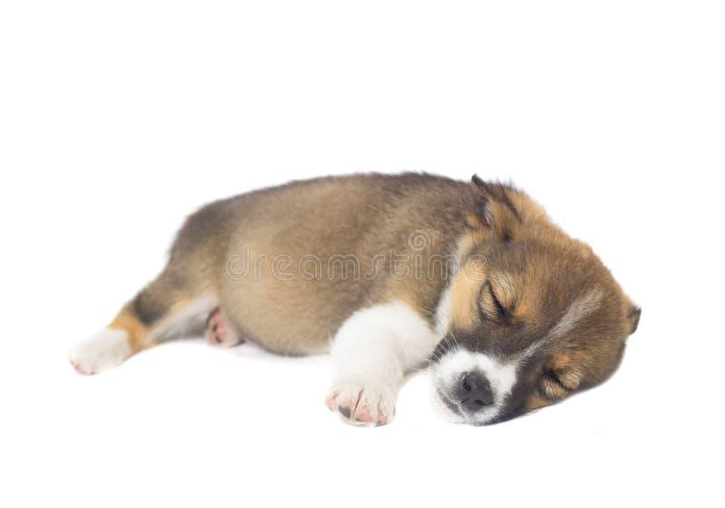 Roligt sova för valp arkivfoton