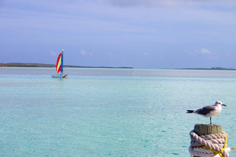 Download Roligt sportvatten arkivfoto. Bild av destination, segling - 503738