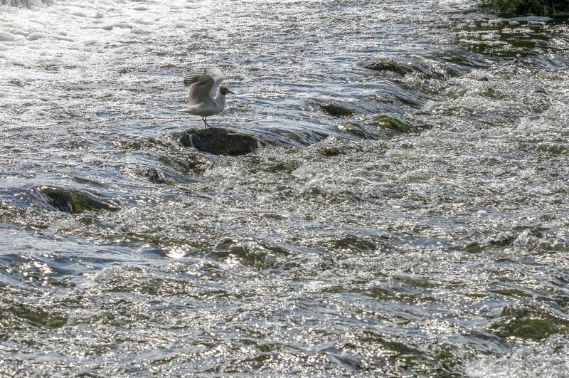 Rolka rzeczny spływanie nad skałami z wielką siłą zdjęcia royalty free