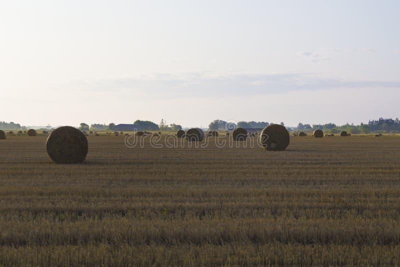 Rolki słomiane na polu rolnym latem rano obrazy stock