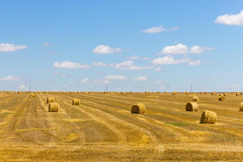 Rolki siano w polu banatka Haystacks w ziemi uprawnej Pszeniczny żniwa pojęcie bele hay round zdjęcie stock