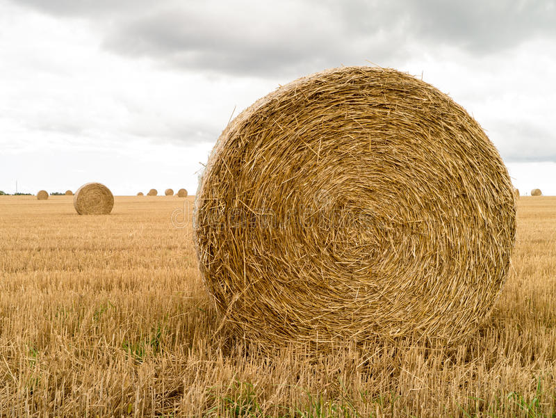Roll of Hay royalty free stock photo