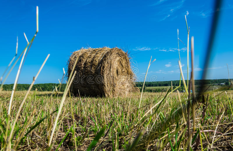 A roll of hay in the field stock image