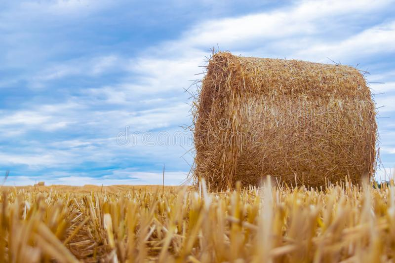 Roll of hay lying on a beveled field stock photography